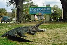 Lazy Gator, Murrells Inlet, United States