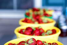 Sunset Berry Farm, Alderson, United States