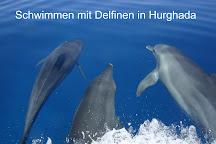 Delfinausflug mit MO, Hurghada, Egypt