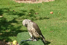 West Sussex Falconry, Compton, United Kingdom