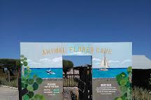 Animal Flower Cave, Saint Lucy Parish, Barbados