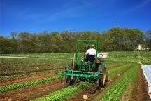 Chestnut Hill Farm, Southborough, United States