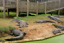 Gators and Friends - Alligator Park & Exotic Zoo, Greenwood, United States