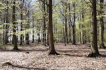 Palsjo skog, Helsingborg, Sweden