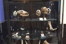 Prehistoric Anthropology Museum, Monaco-Ville, Monaco