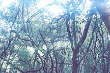 Oloolua Nature Trail, Nairobi, Kenya