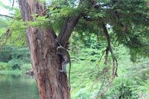 Mzima Springs, Tsavo National Park West, Kenya