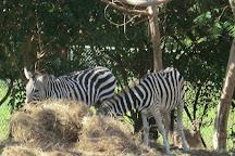 Jamaica Zoo, Lacovia, Jamaica