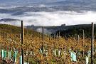 Iona Wine Farm