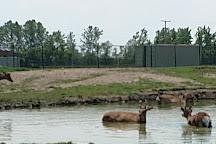 African Safari Wildlife Park, Port Clinton, United States