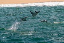 Dive Ninja Expeditions, Cabo San Lucas, Mexico