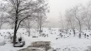 Кладбище животных, проспект Соборности, дом 30 на фото Киева
