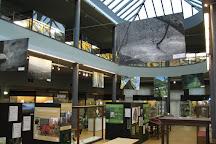Museum regional des Sciences naturelles, Mons, Belgium