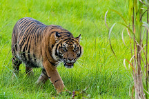 Manor Wildlife Park, St. Florence, United Kingdom