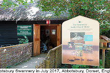 Abbotsbury Swannery, Abbotsbury, United Kingdom