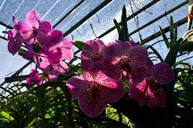 Mae Ram Orchid, Mae Rim, Thailand