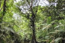 Amazon Jungle Trips, Leticia, Colombia