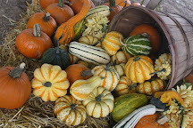 Perryville Pumpkin Farm, Perryville, United States