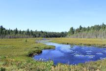 Mizzy Lake Trail, Algonquin Provincial Park, Canada