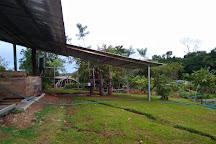 Tree Chocolate Tour, Upala, Costa Rica