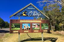 Lamington National Park, Lamington National Park, Australia
