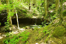 Dismals Canyon, Haleyville, United States