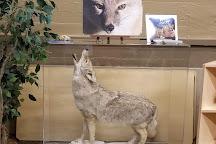 Endangered Wolf Center, Eureka, United States