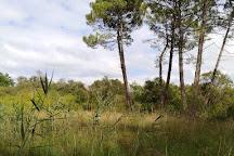 Reserve Naturelle de l'Etang Noir, Seignosse, France