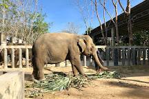 Phuket Elephant Sanctuary, Phuket, Thailand