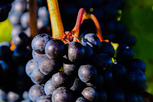 Chateau Grand Traverse Winery, Traverse City, United States
