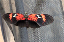 Butterfly House & Aquarium, Sioux Falls, United States