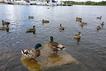 Lough Key Forest Park, Boyle, Ireland
