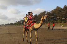 Dahanu Beach, Dahanu, India