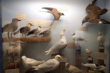 Naturhistorisk Museum - Skagen Naturcenter, Skagen, Denmark