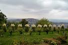 Sveta Gora (Holy Mountain)