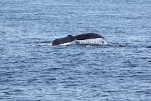 Cape May Whale Watch & Research Center, Cape May, United States