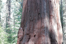 Merced Grove, Yosemite National Park, United States