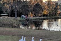 Capercaillie Wine Company, Lovedale, Australia