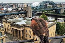 Riverside Falconry, Newcastle upon Tyne, United Kingdom