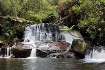 Andasibe-Mantadia National Park, Toamasina Province, Madagascar