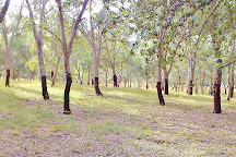 National Arboretum Canberra, Weston, Australia