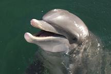 Dolphin World, Miami, United States