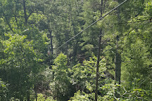 Zipline Canopy Tours of Blue Ridge, Blue Ridge, United States