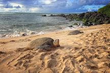 Blue Hawaii Photo Tours, Honolulu, United States