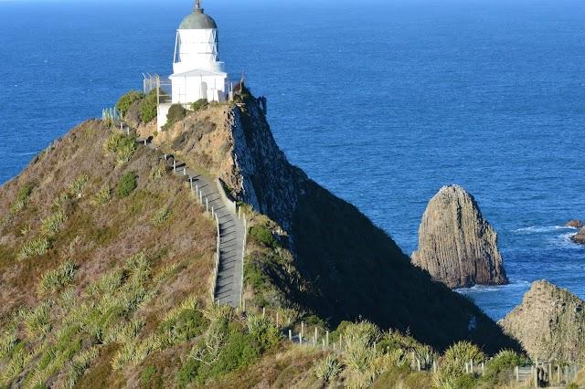 Roaring Bay Penguins & Seals Observatory