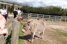 The Isle of Wight Donkey Sanctuary, Ventnor, United Kingdom