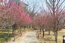 Gukchaebosang Memorial Park, Daegu, South Korea