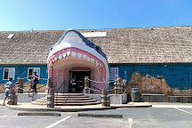 Sharky's, Ocean Shores, United States