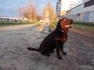Погулять С Собакой, улица 5 Августа, дом 27, корпус 3 на фото Белгорода