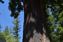 The Chandelier Tree, Los Angeles, United States